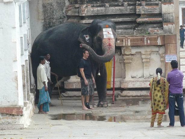 Elefante dando su bendición en Hampi