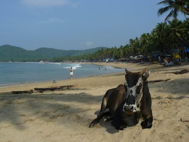 Tomando el sol con las tetas al aire en Goa
