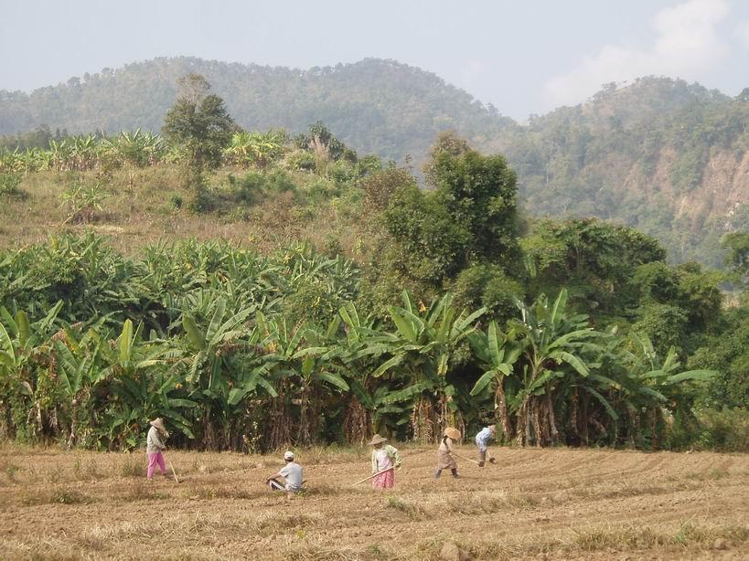 Campos a las afueras de Hsipaw