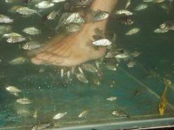 masaje de pie con peces