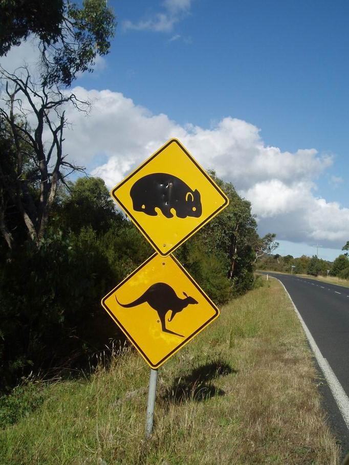 Señales de presencia de vida salvaje por las carreteras