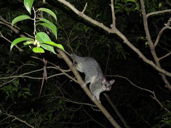 Possum en casa de Jean