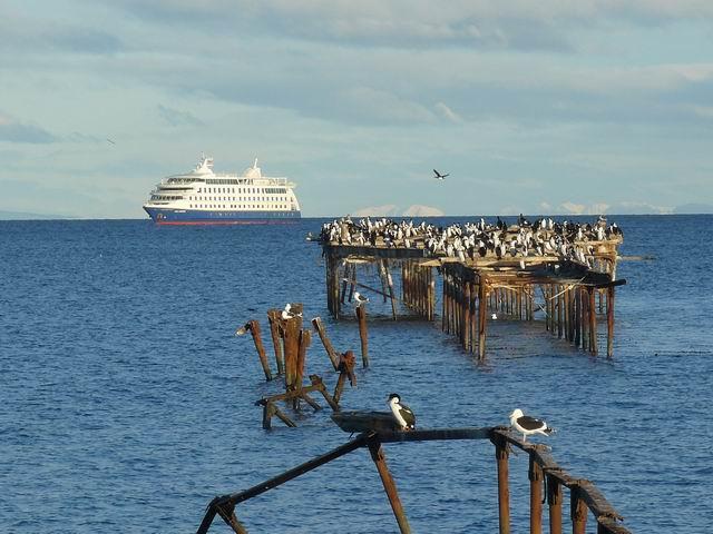 Cormoranes en el estrecho de Magallanes