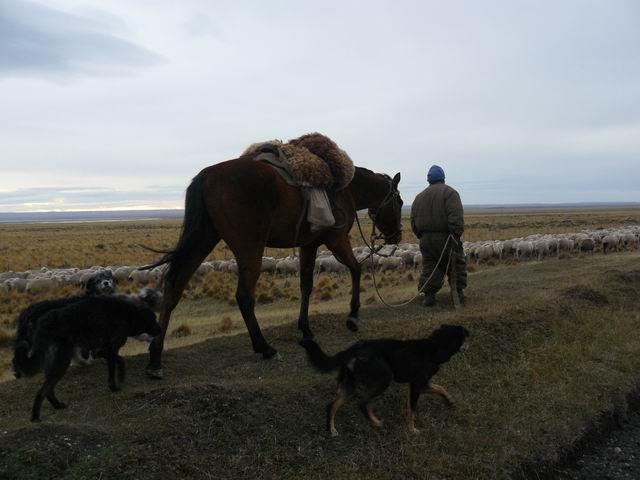 Pastor en Tierra del Fuego