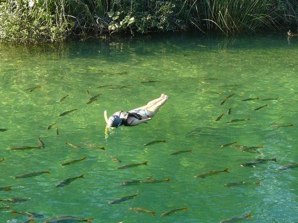 Buceando entre piraputangas en Bonito