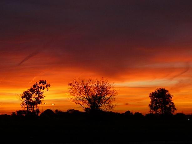 Puesta de sol en el Pantanal