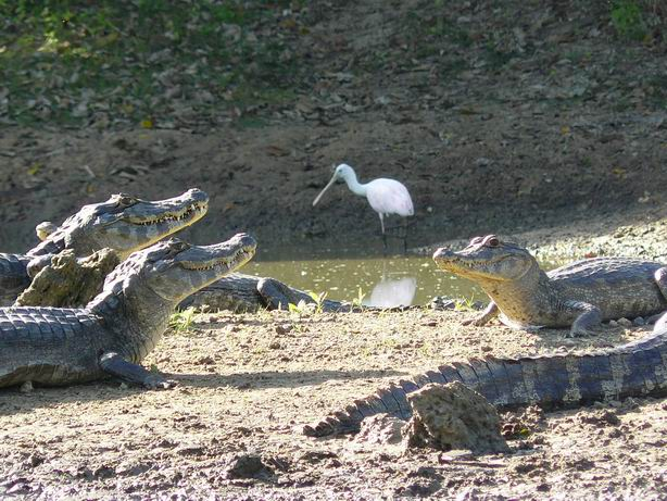 Vecinos del Pantanal