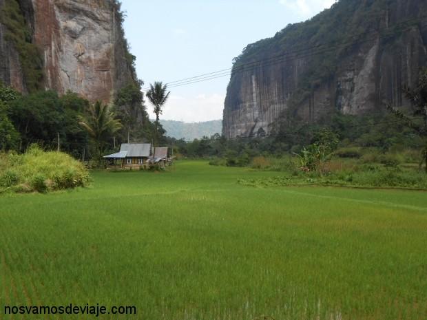 Arrozales en el Valle de Harau