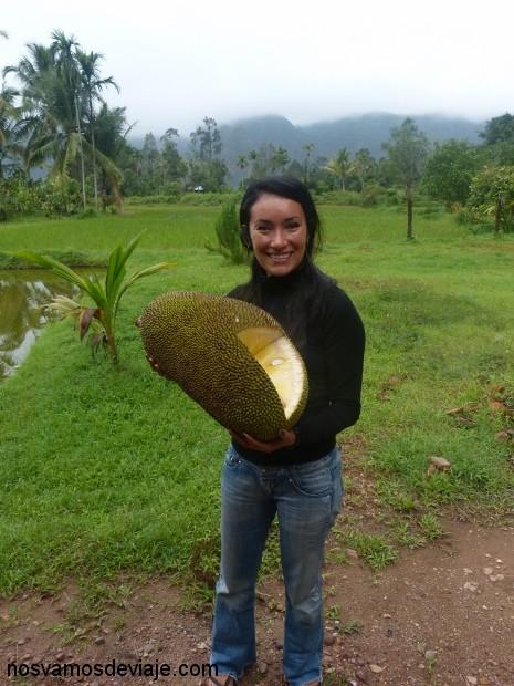 Cargando unos cuantos kilos de jackfruit