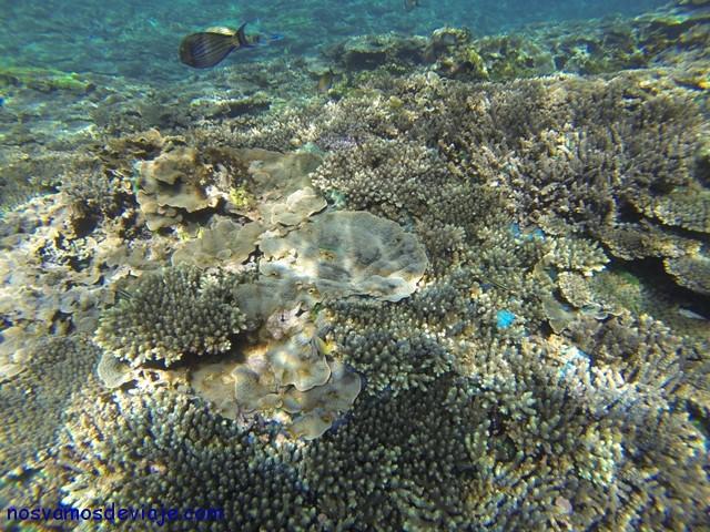 Corales de Nusa Lembogan