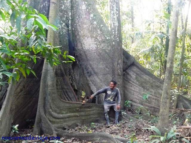 Amazonas puro