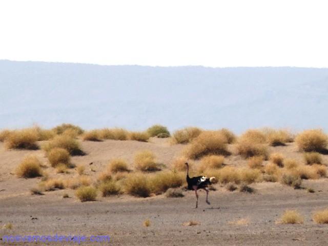 avestruz etiiopia