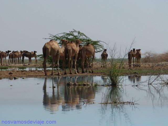camellos spa