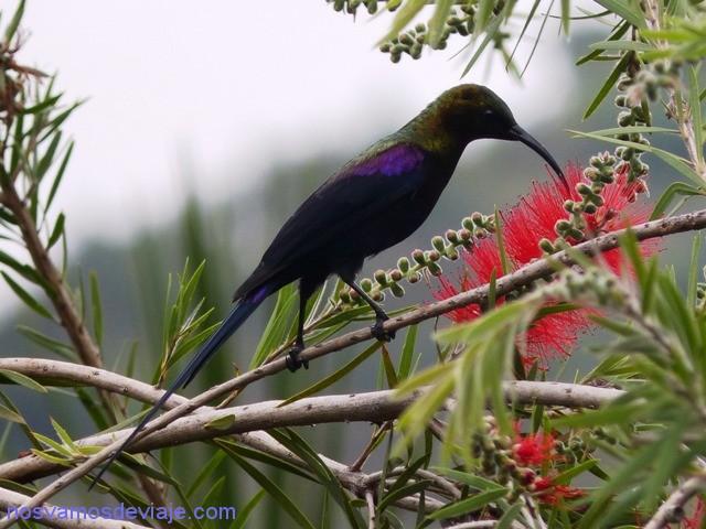 colibri etiopia