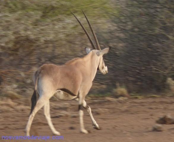 orix etiopia