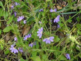medias flores