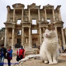 El rey de Efeso